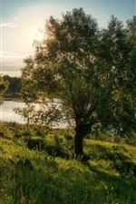 Preview iPhone wallpaper Tree, meadow, pond, sun rays, summer