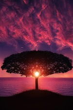 Preview iPhone wallpaper Tree, sea, red sky, clouds, sunset