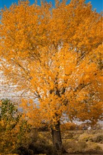 Preview iPhone wallpaper Tree, yellow leaves, autumn, nature