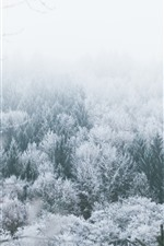 Preview iPhone wallpaper Trees, frost, winter, snow, fog