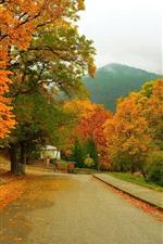 Trees, road, mountain, autumn