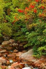 Preview iPhone wallpaper Trees, rocks, creek