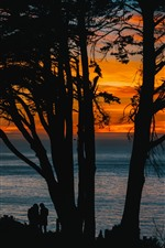 Preview iPhone wallpaper Trees, sea, sunset, silhouette