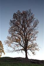 Árvores, céu, casa, república checa