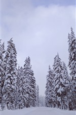 Preview iPhone wallpaper Trees, white snow, winter