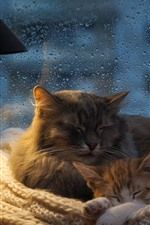 Preview iPhone wallpaper Two cats sleeping, window, water droplets, book, coffee