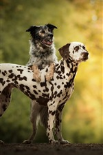 Preview iPhone wallpaper Two dogs, friends, spots