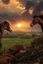 Preview iPhone wallpaper Two horses, sunset