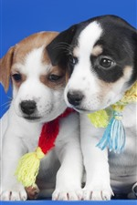 Preview iPhone wallpaper Two puppies, blue background
