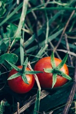Preview iPhone wallpaper Two red tomatoes, vegetable