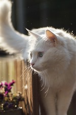Preview iPhone wallpaper White cat look, fence, backlight