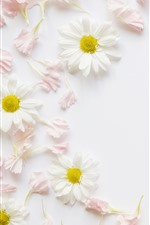 Preview iPhone wallpaper White chamomile, pink petals, decoration, background