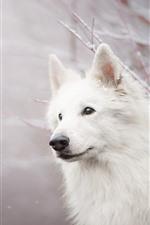 White dog, look, twigs, snow