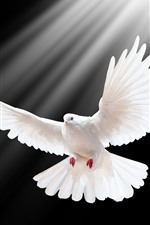 Preview iPhone wallpaper White dove flight, wings, black background, light rays
