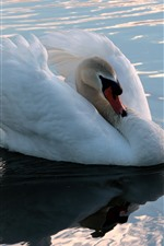 Preview iPhone wallpaper White swan, pond, water, shine