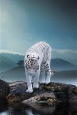 Preview iPhone wallpaper White tiger, rocks, pond, fog, morning