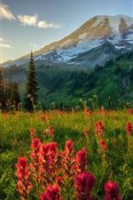 Wildflowers, bushes, mountains, sun rays, sunset