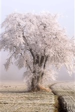 Winter, snow, frost, tree, fields