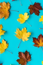 Preview iPhone wallpaper Yellow and brown maple leaves, blue background