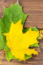 Preview iPhone wallpaper Yellow and green maple leaf, bench