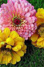 iPhone обои Желтые и розовые цветы, земля
