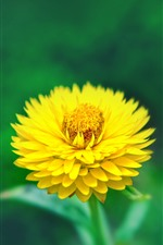 Preview iPhone wallpaper Yellow flower close-up, petals, green background