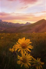 Preview iPhone wallpaper Yellow flowers, grass, mountains, sunset