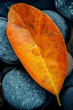 Preview iPhone wallpaper Yellow leaves, stones, water, still life