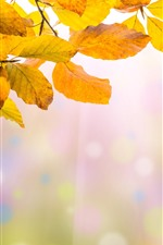 Preview iPhone wallpaper Yellow leaves, twigs, hazy, autumn