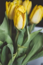 Preview iPhone wallpaper Yellow tulips, bouquet, hazy
