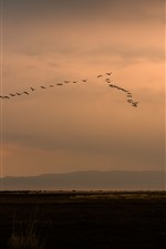 Un grupo de pájaros volando en el cielo, puesta de sol