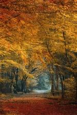 Otoño, bosque, árboles, hojas amarillas y rojas.