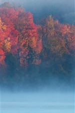 Preview iPhone wallpaper Autumn, morning, trees, fog, river