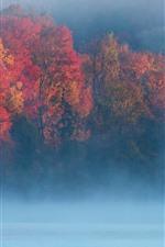 Otoño, mañana, árboles, niebla, río.