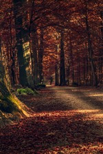 Herbst, Bäume, Weg, rote Blätter, Sonnenschein