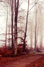 Preview iPhone wallpaper Autumn, trees, red leaves, fog, morning