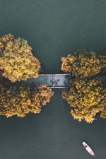 Otoño, árboles, camino, vista superior, río.