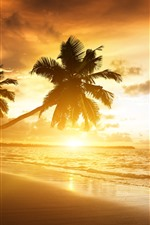 Preview iPhone wallpaper Beach, sea, palm trees, sunset, clouds