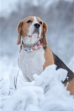Preview iPhone wallpaper Beagle, dog, winter, snow