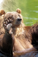 Preview iPhone wallpaper Bear play water, zoo