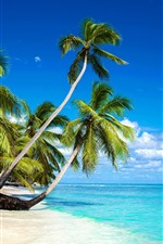 Preview iPhone wallpaper Beautiful beach, palm trees, sea, blue sky, clouds, tropical