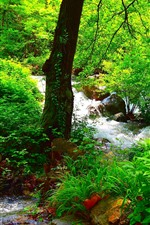 Preview iPhone wallpaper Beautiful summer forest, green, trees, rocks, stream