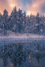 Hermoso paisaje natural de invierno, árboles, nieve, río, atardecer.