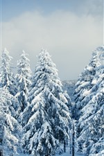 Preview iPhone wallpaper Beautiful winter, snow, trees, forest