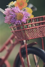 Bicicleta, cesta, flores