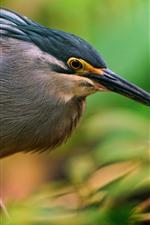 Preview iPhone wallpaper Bird, beak, twigs