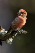 Pájaro mira hacia atrás, árbol.