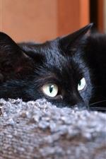 Vorschau des iPhone Hintergrundbilder Schwarze Katze, Augen, Sofa