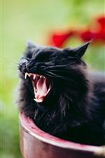 iPhone обои Черный котенок зевает