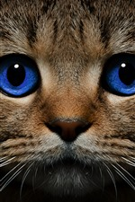 Preview iPhone wallpaper Blue eyes cat front view, face